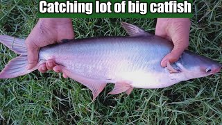 Best of cast net fishing in village - Traditional cast net fishing by beautiful woman (Part-478)