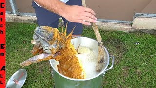 FRYING 5ft. IGUANA WHOLE! **Cold Iguanas are Adapting to Cold Weather**