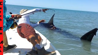 JAWS MASSIVE SHARK in SHALLOW WATER!
