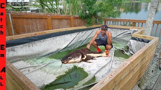 FISH POND DESTROYED! **Where are the Catfish**