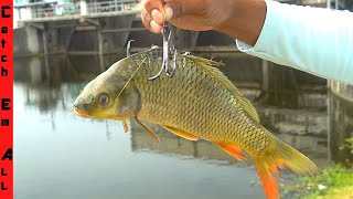 Using GIANT LIVE BAIT to Catch MONSTER FISH! **Swamp Fishing**