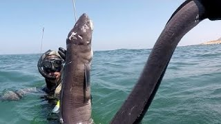 Best Big Eel Fishing. - Amazing Catching & Processing Eel on The Sea