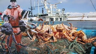 Everyone should watch this Fishermen's video - Catch Giant Alaska King Crab with Fishing Net