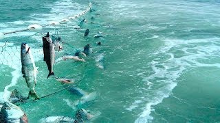 Awesome Automatic Longline Net Fishing - Big Catching and Processing Fish on The Sea