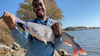 He Caught his BIGGEST CATFISH EVER?!! (Ft. Reggie)