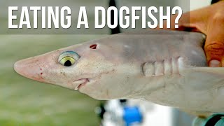 We Cooked a Dogfish!