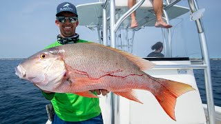 Giant Mutton Snapper, Amberjacks, Sailfish and Bull Shark