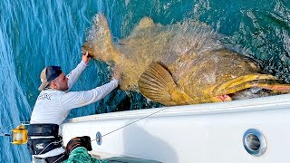 MASSIVE 500+lb Goliath Grouper!!