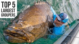 Top 5 Largest Goliath Groupers Caught