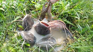 Amazing Fishing Bait...Fish Hunting By Baby Frogs Bait in Hole