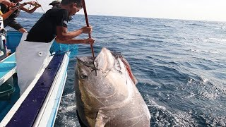 Amazing Fastest Giant Bluefin Tuna Fishing Skill - Most Satisfying Sea Fishing Video