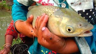 Fish Catching By Cast Net - Best Cast Net Fishing in Village - Fish Video (Part-480)