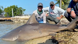 Dock Fishing for GIANT Bull Sharks