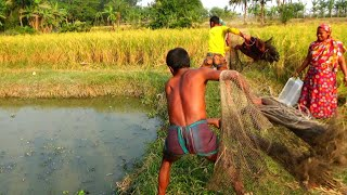 Best Cast Net Fishing - Traditional Fish Catching in Village - Fishing With Beautiful Nature