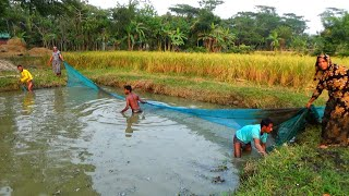 Best Net Fishing - Traditional Net Fishing in Village Pond - Fishing By Net