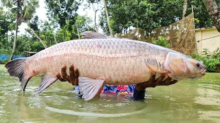 Amazing Cast Net Fishing | Unbelievable Fishing | Cast Net Fishing! Black Carp Fishing