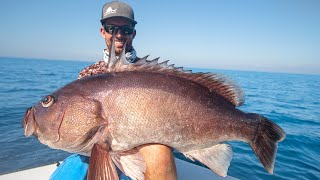 Monster Pacific Ocean Grouper Fishing