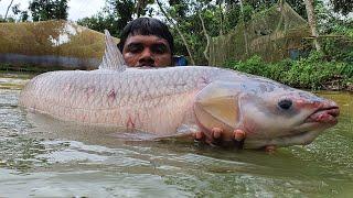 Big Monsters Fish Catch By Cast Net | Net Fishing | Big Carp Fish Fishing