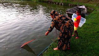 Net Fishing - Catching Fish By Cast Net Fishing - Fishing video