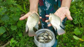Traditional Cast Net Fishing in Village - Fishing With A Cast Net - Fishing Videos