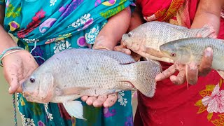 Catching fish with a cast net - fishing with beautiful nature - fish video (Part- 550)