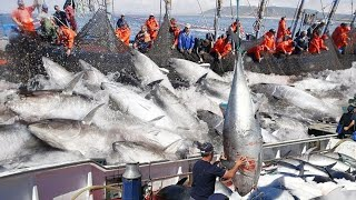 Amazing Big Catch on The Sea - Catching and Processing Hundreds Tons of Fish With Modern Big Boat