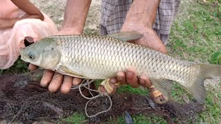 Fish video - Best Net Fishing in Village Pond - Machhali Wala