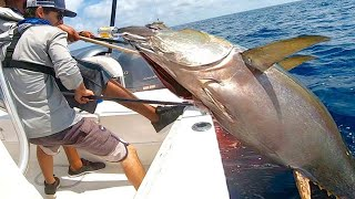 Amazing Fastest Giant Bluefin Tuna Fishing Skill - Most Satisfying Sea Fishing Video ▶2