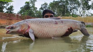 Cast a Lot of Fish With Net Fishing | Net Fishing in Pond